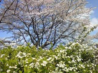 2010-04-10T15_51_30-6bbee.jpg