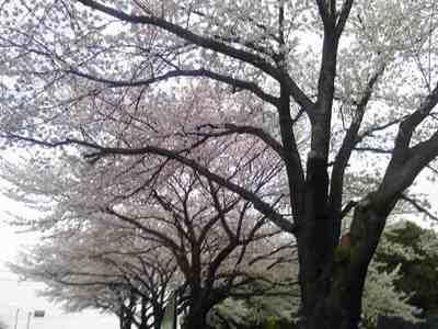2010-04-07T17_59_16-81ce6.jpg